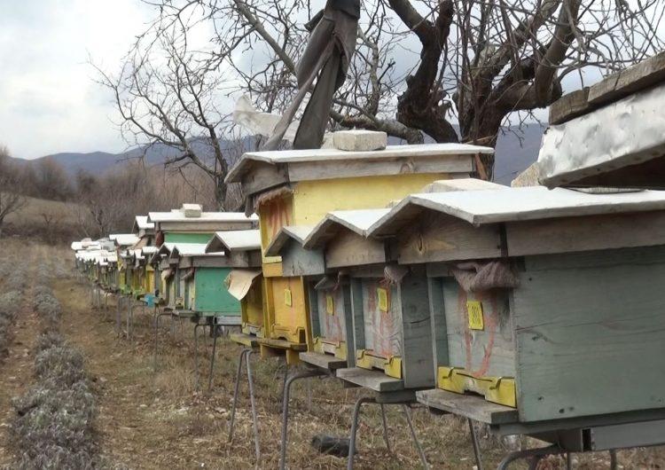 Peleshi: Ndalojmë pesticidet që dëmtojnë kolonitë e bletëve